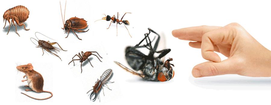Gaziemir Böcek İlaçlama