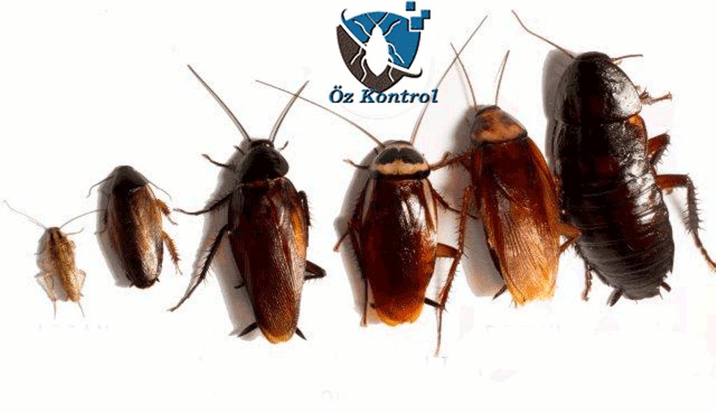 hamam böceği ilaçlama izmir