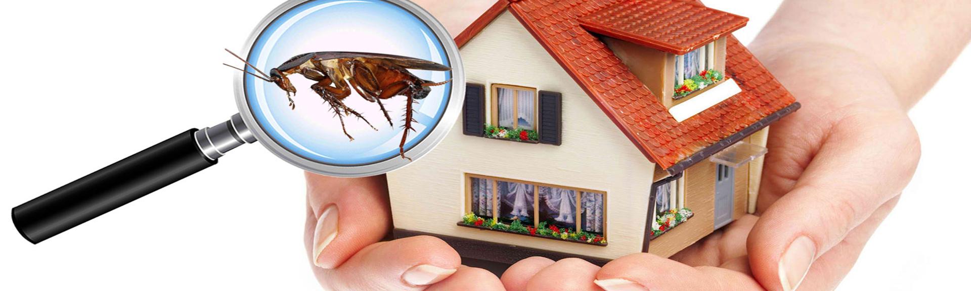 Urla Böcek İlaçlama Firması