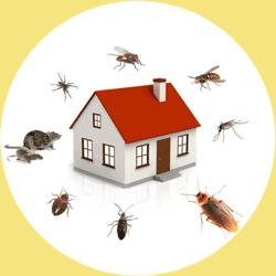izmir ev böcek ilaçlama